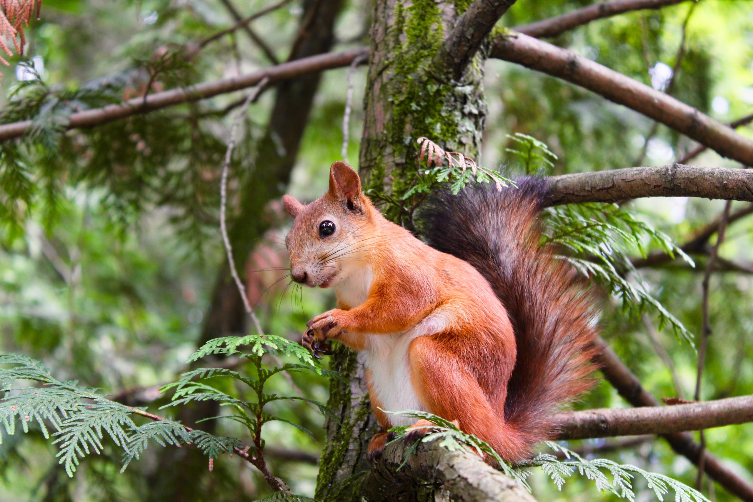 How Microsoft 365 can help with squirrel keeping!